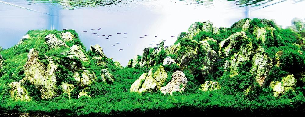 Светлые камни, покрытые зеленью, создают впечатление настоящего горного пейзажа