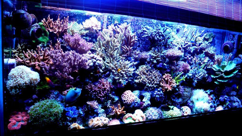 Морские аквариумы по праву считаются живописнейшими из всех видов аквариумов