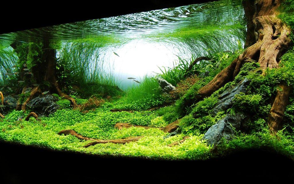 Великолепная имитация подводных корней создается грамотно подобранными корягами