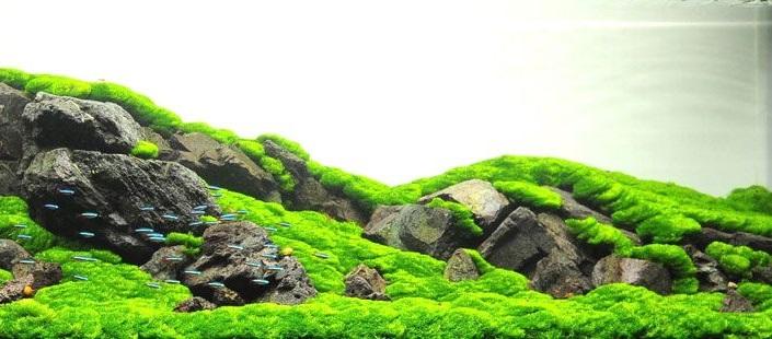 Используя хорошо подобранные камни и любое ковровое растение, Вы получите прекрасный минималистский дизайн