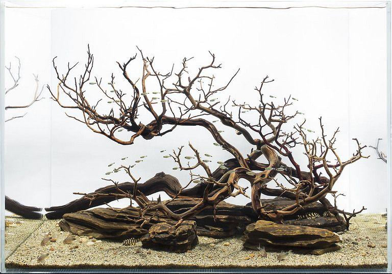 Деревянная коряга может прекрасно служить центральным элементом всей композиции