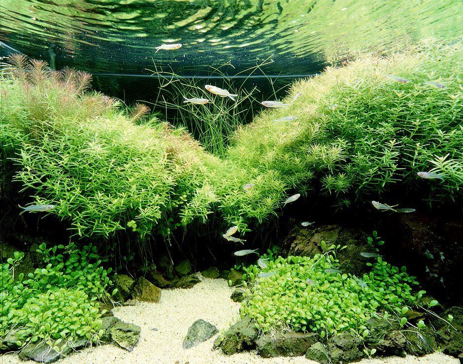 Маленькая и укромная заводь в Вашем аквариуме