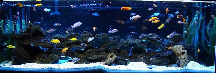 Разноцветные рыбки смотрятся очень эффектно на фоне коряги и светлого грунта