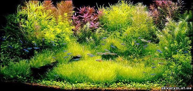 Роль и значение растений в аквариуме